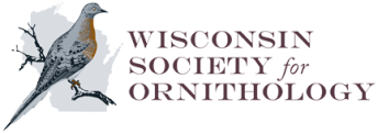 WSO-logo-1-15-transparent
